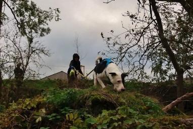 Entrainement chiens pisteurs a socourt du vendredi 15 novembre 2019 9